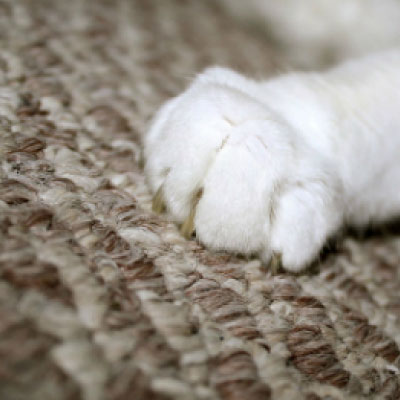 Carpet Pet Damag  Repair Sunbury